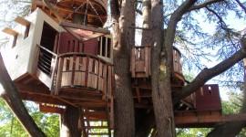 Tree Houses Photo