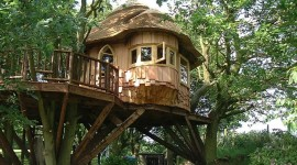 Tree Houses Photo Download