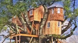 Tree Houses Photo Free