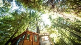 Tree Houses Wallpaper Download