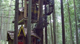 Tree Houses Wallpaper For Android