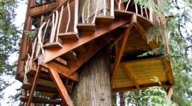 Tree Houses Wallpaper For Mobile