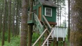 Tree Houses Wallpaper For PC