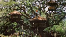 Tree Houses Wallpaper Gallery