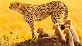 Wild Nature Desktop Wallpaper For PC