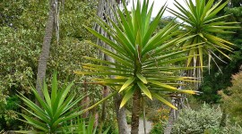 Yucca Wallpaper Download