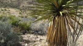 Yucca Wallpaper Download Free