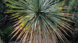 Yucca Wallpaper High Definition