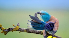 4K Blue Feather Photo