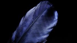 4K Blue Feather Wallpaper