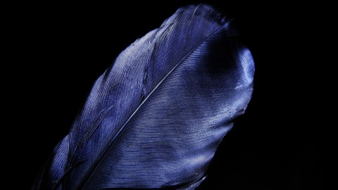 4K Blue Feather wallpapers high quality