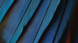 4K Blue Feather Wallpaper For IPhone