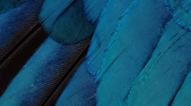4K Blue Feather Wallpaper For Mobile#1