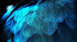 4K Blue Feather Wallpaper HQ
