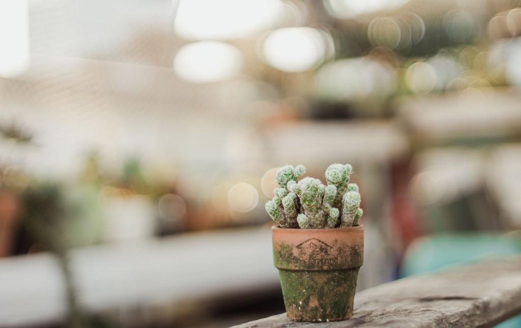 4K Cactus wallpapers HD