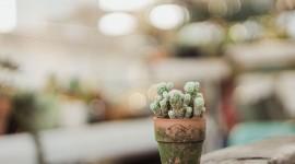 4K Cactus Best Wallpaper