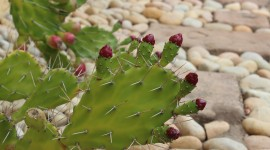 4K Cactus Desktop Wallpaper
