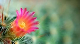 4K Cactus Desktop Wallpaper For PC