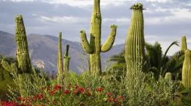 4K Cactus Desktop Wallpaper HD