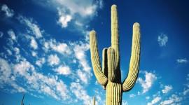 4K Cactus Image