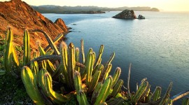 4K Cactus Photo Download