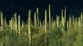 4K Cactus Photo Free#1