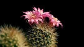 4K Cactus Picture Download
