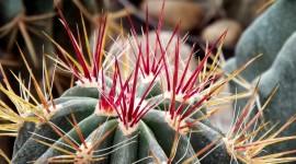 4K Cactus Pink Photo