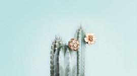 4K Cactus Pink Wallpaper For Mobile