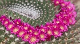 4K Cactus Pink Wallpaper Full HD