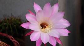 4K Cactus Pink Wallpaper Gallery