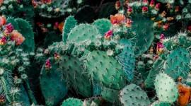 4K Cactus Wallpaper Download