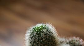 4K Cactus Wallpaper HQ