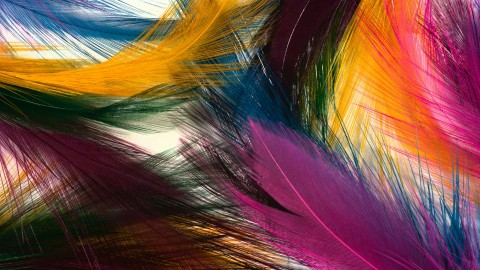 4K Multicolored Feather wallpapers high quality