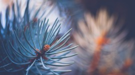 4K Pine Branches Needles Aircraft Picture
