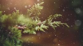 4K Pine Branches Needles Wallpaper Free