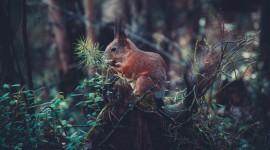 4K Squirrel Park Image Download