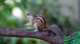 4K Squirrel Park Photo