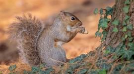 4K Squirrel Park Photo Download