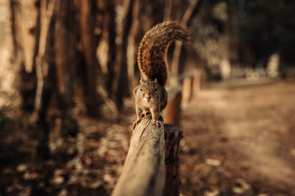 4K Squirrel Park wallpapers HD