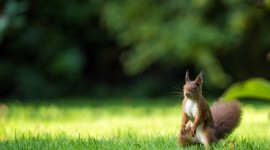 4K Squirrel Park Wallpaper For Desktop