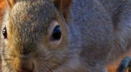 4K Squirrel Park Wallpaper For Mobile