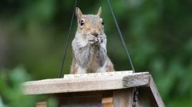 4K Squirrel Park Wallpaper Full HD