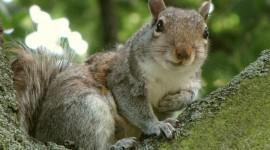 4K Squirrel Park Wallpaper HQ