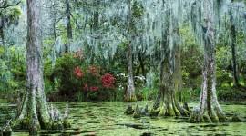4K Swamp Best Wallpaper