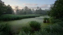 4K Swamp Photo Download