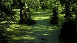 4K Swamp Wallpaper