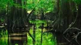 4K Swamp Wallpaper Full HD