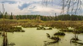 4K Swamp Wallpaper Gallery