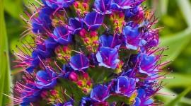 4K Tropical Flowers Wallpaper For Mobile
